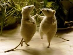 als de kat van huis is dansen de muizen tussen de moestuintjes, Gartenarbeit ideen