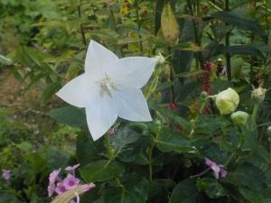 Toen close-ups van de bloemen