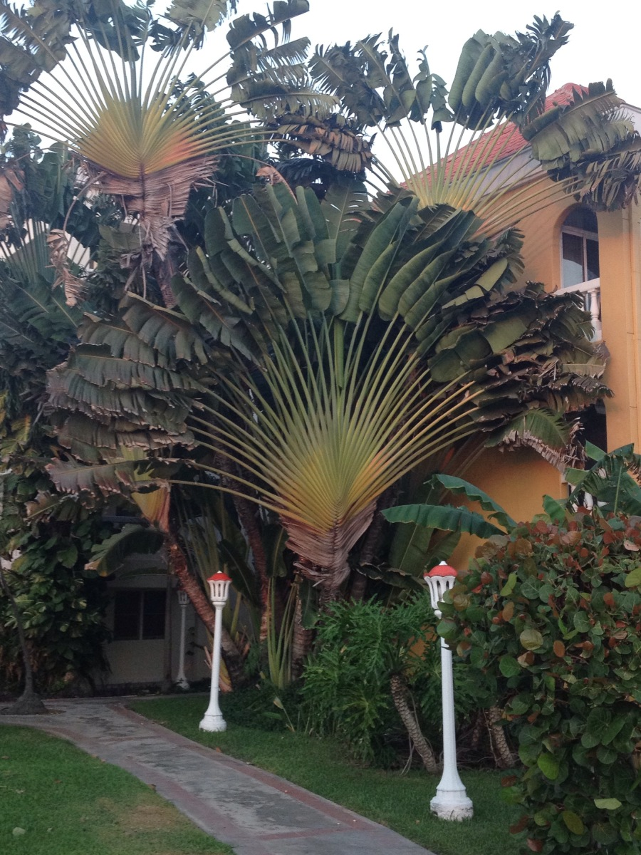 Bomen in Curacao